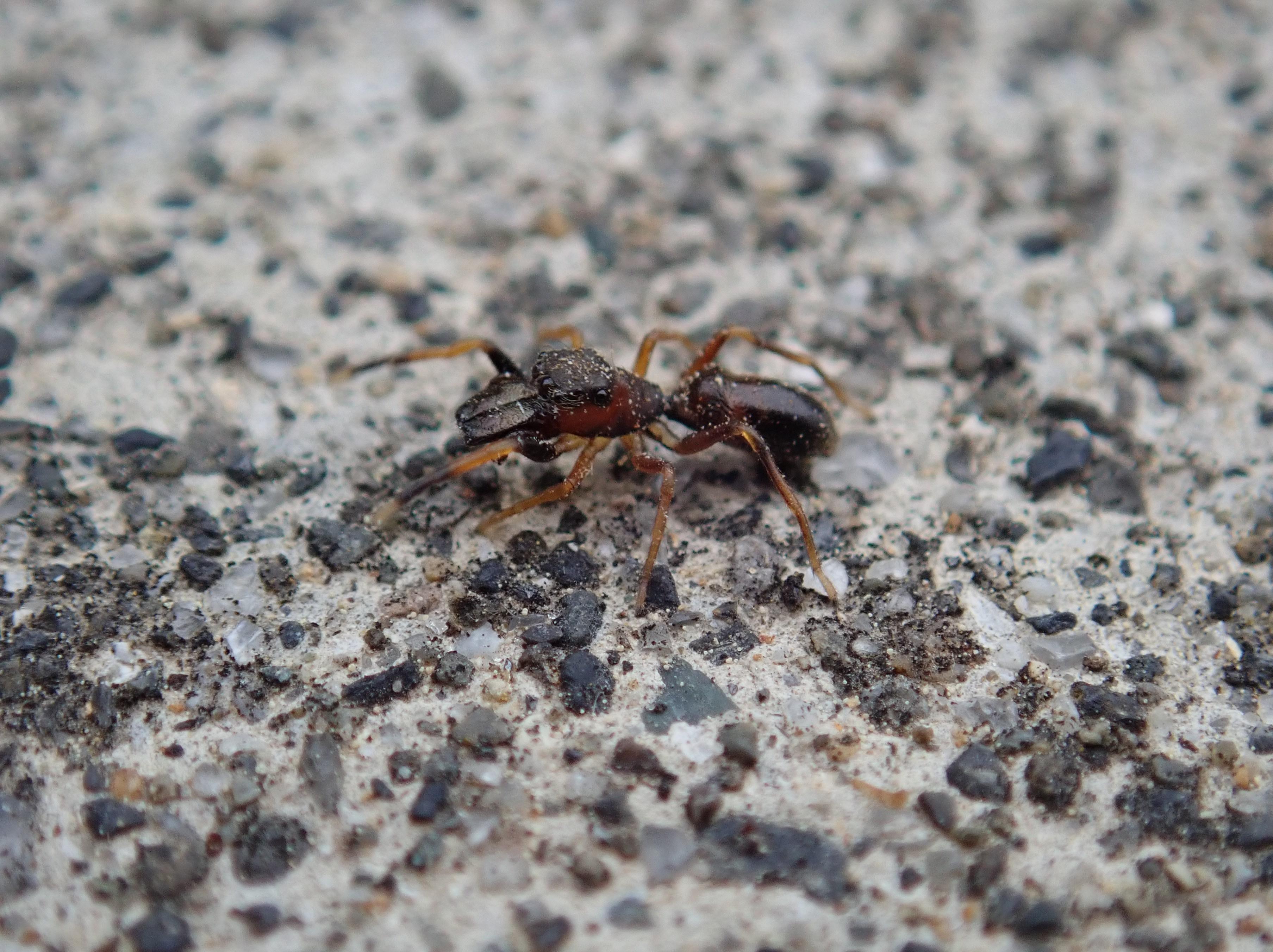 みたい な 虫 クモ